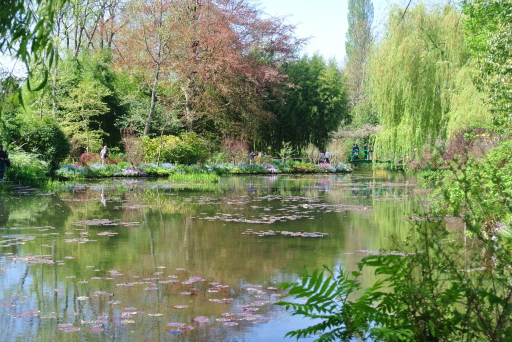 The famous pond created by Monet in a field