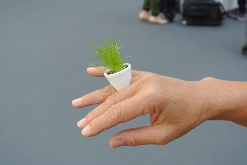 a porcelain ring in which you grow what you like (Esprit Porcelaine in Limoges)