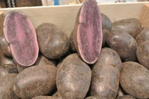 the vitelotte originally came from Peru and is good in purées