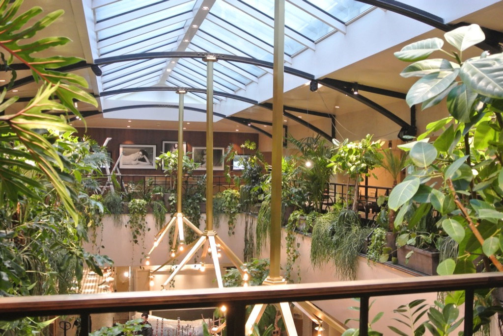 """A tropical forest for the """"balcon"""" where you can have tapas and small meals"""