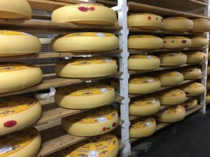 Wheels of emmental are kept in the cellar of the cheese pavilion