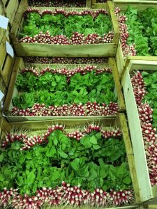 Fresh radishes come from small local farms in Ile de France