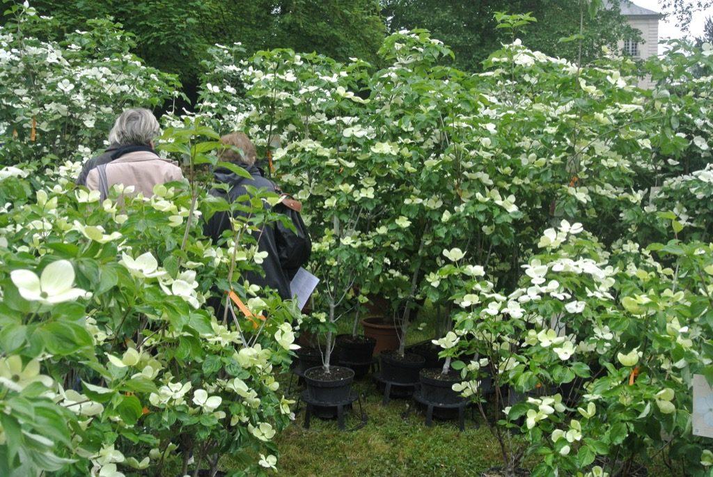 A forest of Dogwoods Venus won a Prize