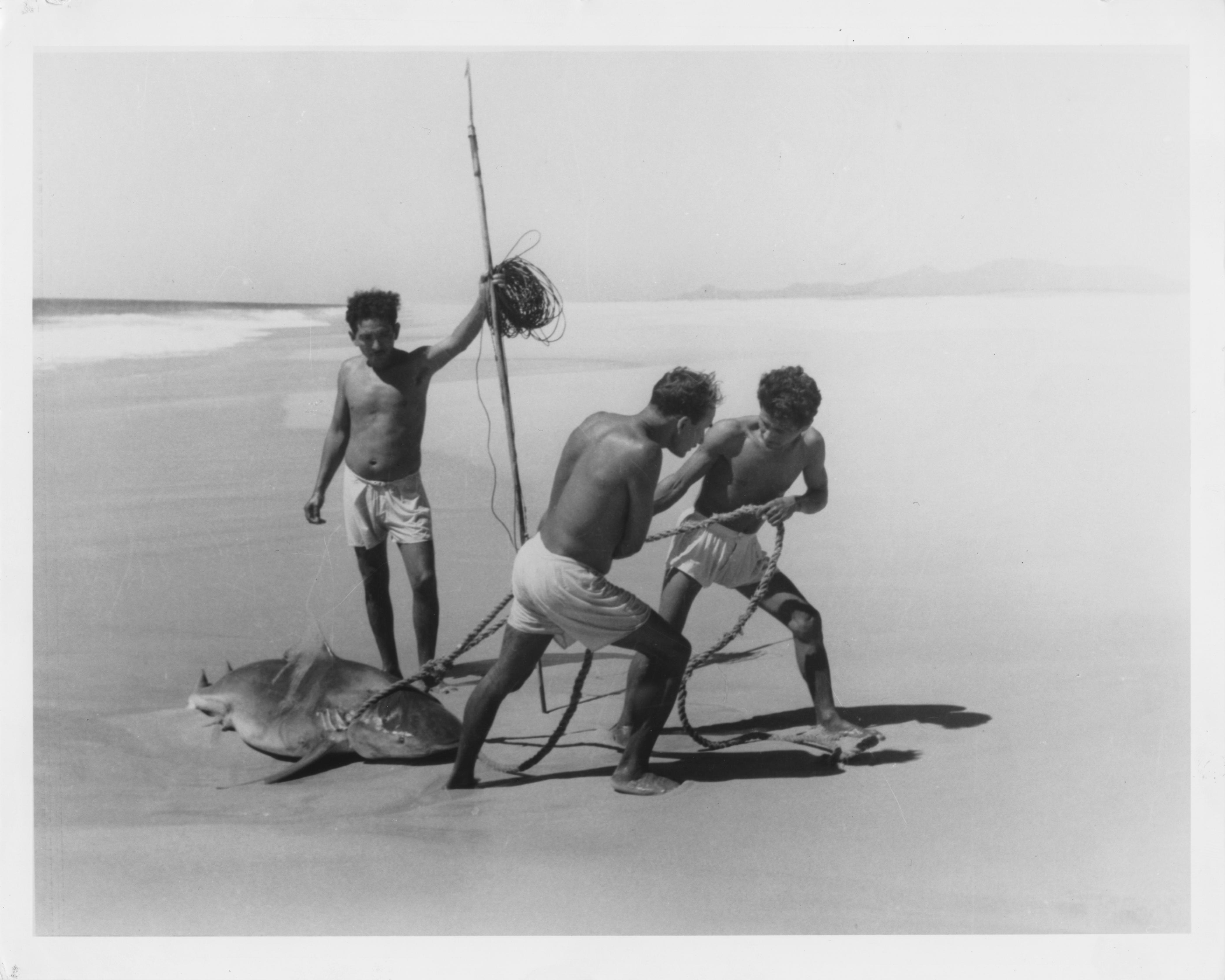 Fishermen with a shark, Acapulco, 1950