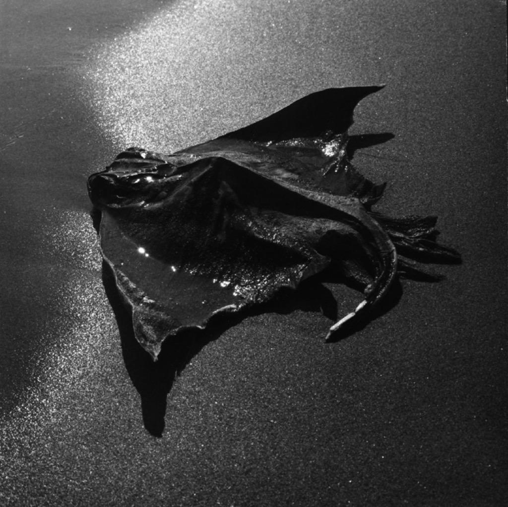 Raie échouée (détail) Camargue, 1965, © Atelier Lucien Clergue