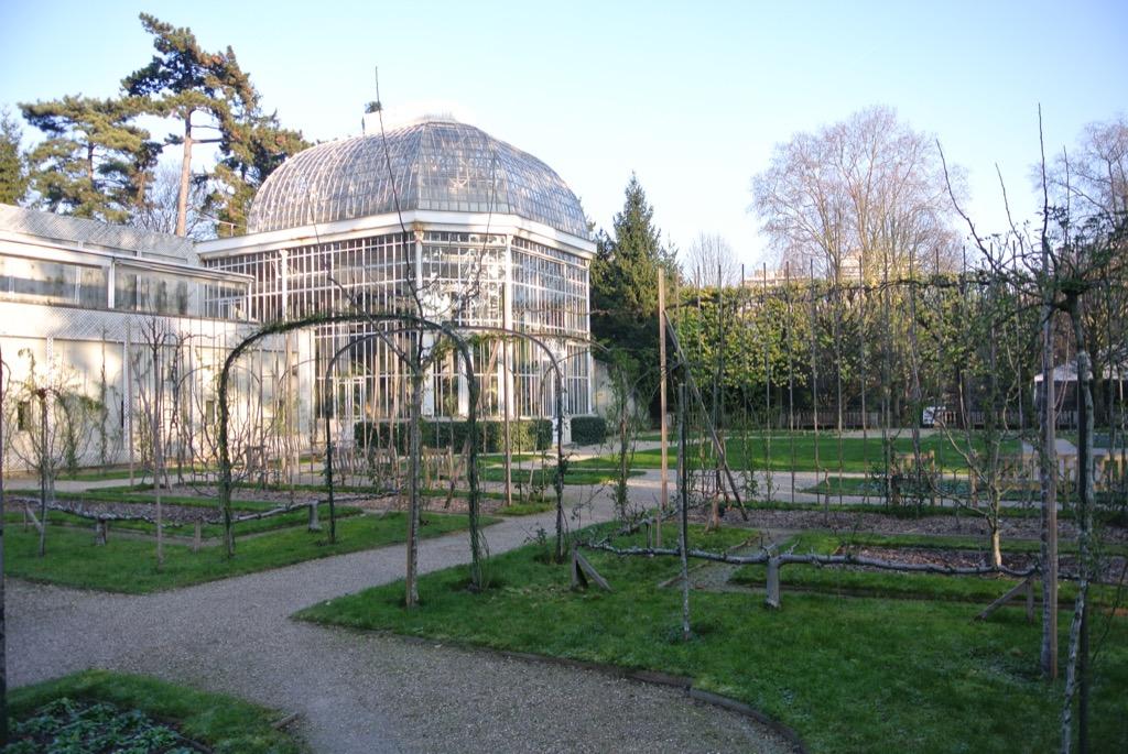 The winter garden in glass