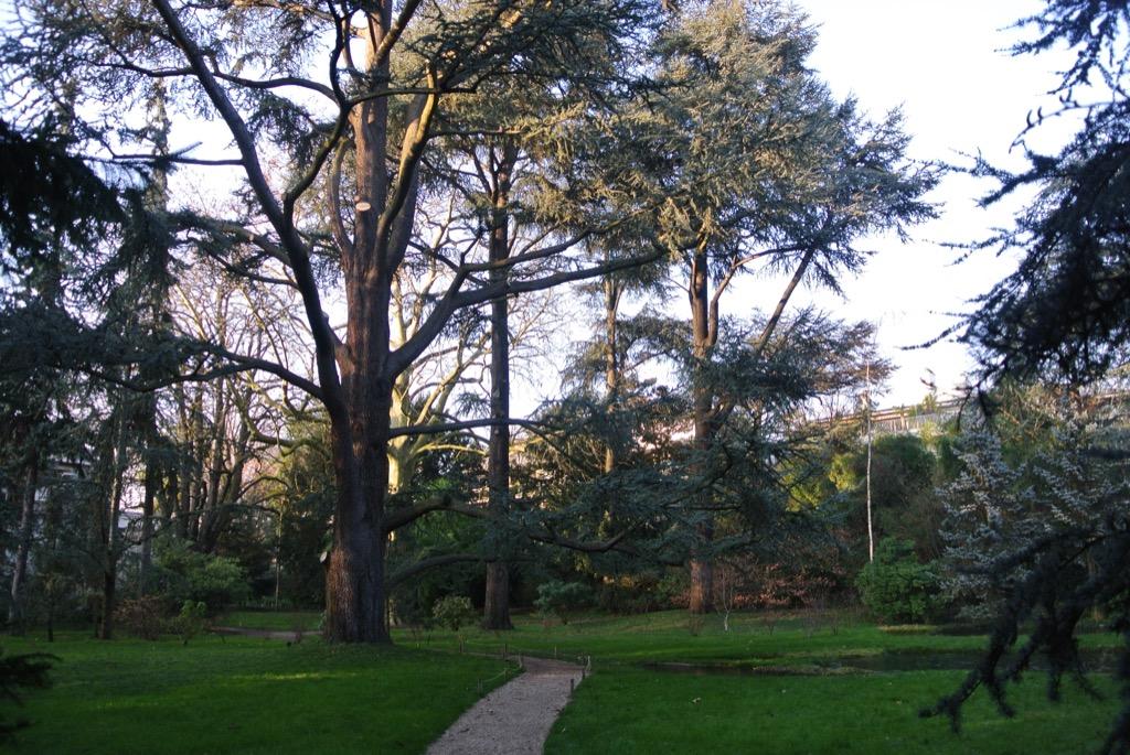 Cedar trees and pines are a splendour